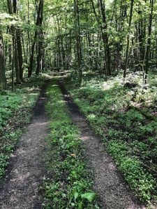 Trail in Newport State Park