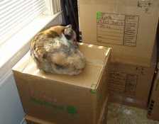 Cat sleeping on box